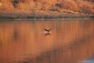 lago di vico 2010.12.30b dsc_0096rid